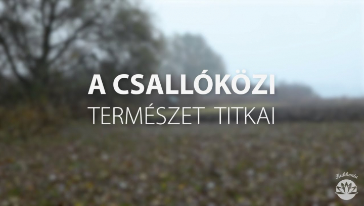 Embedded thumbnail for Kukkónia