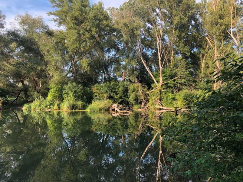 Vytvorenie lesnej oddychovej oázy Kukkónia